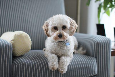 Was sind gute Hundeleckerlis, die nicht viel Stuhlgang verursachen?