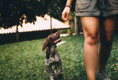 Gute Marken für Hundefutter: Worauf müssen Sie achten?