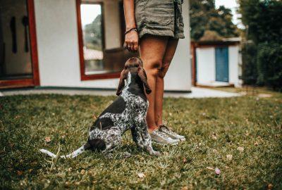 Das beste Senior-Hundefutter: wie findet man es?
