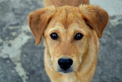 Kann ein Hund Johannisbeeren essen?